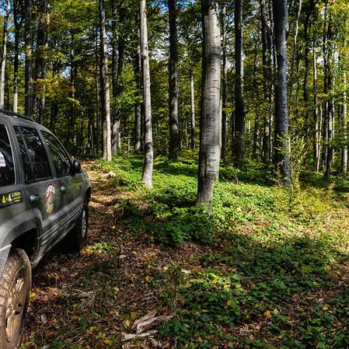 Through Kučaj forests