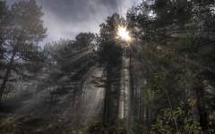 Sun breaking through fog on Zlatibor