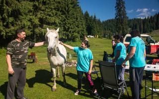 Horses on Poiana Glavoi