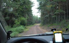 Forest trail to Mileševa