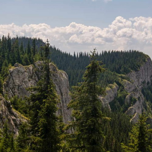 The famous white rocks near Vladeasa