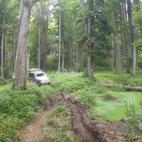 Pushing through deep forests