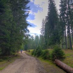 Typical Golija forest scenery