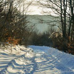 Carpathian forest trail