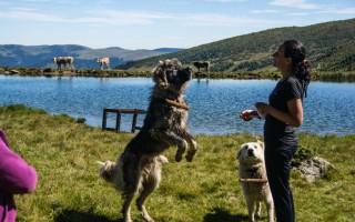 Shepperd dogs on lake Stiol, Rodna mountain