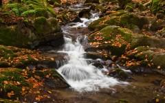 The streams of Golija